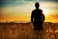 Businessman silhouette among the corn Royalty Free Stock Photo