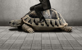Businessman sitting on turtle. Show the slow growth of business Royalty Free Stock Photography