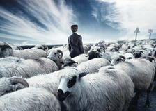 Businessman standing in the middle flock of sheep walking in opposite direction. royalty free stock photography