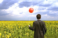 Businessman in sunflowers. With red balloon Royalty Free Stock Photos