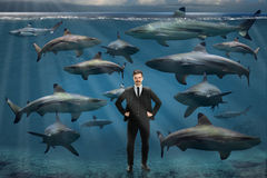 Businessman Surrounded By Sharks. Confident young businessman surrounded by sharks underwater stock images