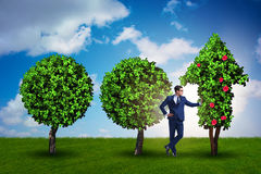 The businessman in sustainable green development concept Stock Photography