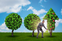 The businessman in sustainable green development concept Stock Photo