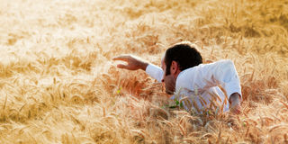 Businessman swimming in a golden field Stock Images