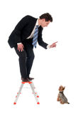 Businessman on top of a ladder pointing at dog Stock Photography