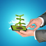 Businessman touching smartphone with plant Stock Images