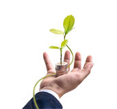 Businessman with tree and coins on hand, business concept Stock Images