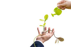 Businessman with tree and coins on hand and hand watering on top tree on white background, business concept, blank text Stock Photos