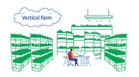 Businessman using laptop sitting office workplace plants smart farming system concept modern vertical organic farm stock illustration