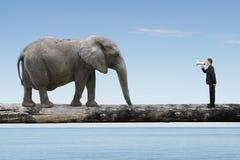 Businessman using speaker yelling at elephant on single wooden b Stock Photography