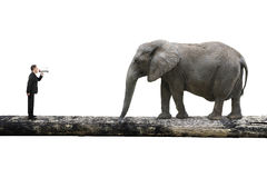 Businessman using speaker yelling at elephant on single wooden b. Ridge, with white background, communication concept Royalty Free Stock Photo