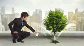 Businessman watering green tree on city background Stock Image
