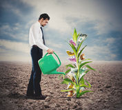 Businessman watering money plant royalty free stock photography