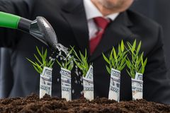 Businessman watering money plants Royalty Free Stock Photography