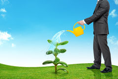 Businessman watering plant Stock Photo