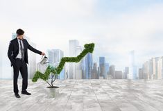 Businessman that watering a plant with a shape of arrow. Concept of growing of company economy . Businessman watering a plant that grows like an arrow . Concept royalty free stock photos