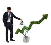 Businessman that watering a plant with a shape of arrow. Concept of growing of company economy . Businessman watering a plant that grows like an arrow . Concept Royalty Free Stock Photo