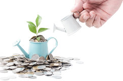Businessman watering a tree growing out of silver coins on water Royalty Free Stock Image