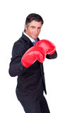 Businessman wearing boxing gloves Stock Photos