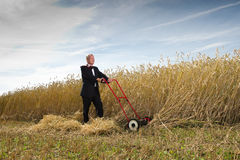 Businessman in Wheat Field. Man in a dark business suit cutting down wheat in a farm field. Metaphor for harvesting the fruits of your labor Royalty Free Stock Images