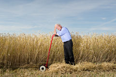 Businessman in Wheat Field. Man cutting down wheat in a farm field. Metaphor for harvesting the fruits of your labor Stock Photos