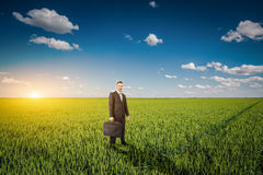 Businessman in a wheat field Stock Image