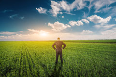 Businessman in a wheat field Stock Photography