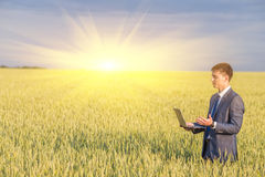 Businessman on a wheat field Royalty Free Stock Photos