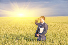 Businessman on a wheat field Royalty Free Stock Photo
