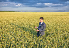 Businessman on a wheat field Royalty Free Stock Image