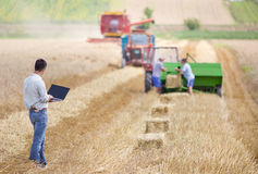 Businessman on wheat harvest Stock Image