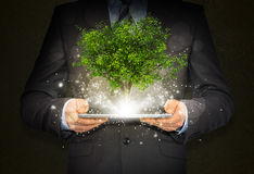 Businessmen hold magical green tree and rays of Stock Photography