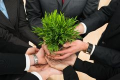 Businesspeople hands holding plant. Close-up Of Businesspeople Hands Holding Plant Together stock photo