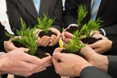 Businesspeople hands with plant and soil Royalty Free Stock Photo