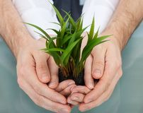 Businesspeople holding plant in cupped hands Royalty Free Stock Photos