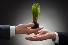 Businessperson giving sapling to the businessman Stock Image