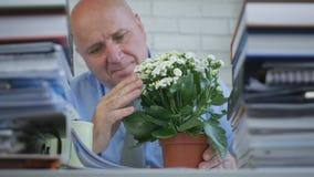 Businessperson In Office Room bewondert en raakt Ontspannen een Mooie Bloem stock foto