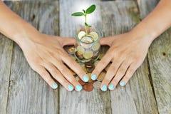 Businesswoman'spalmen die groene installatie het groeien beschermen tegen een kruikhoogtepunt van van van contant geldgeld, bes royalty-vrije stock foto