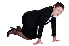 A businesswoman on all fours. A businesswoman on all fours looking for something Royalty Free Stock Images