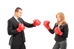 Businesswoman with boxing gloves having a fight with a businessm. An isolated on white background Stock Photos