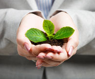 Businesswoman holding little green plant i Royalty Free Stock Image