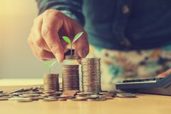 Businesswoman holding money with plant growing on coins and putt. Ing stack, finance accounting concept Stock Image
