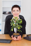 Businesswoman holding a plant Stock Photos