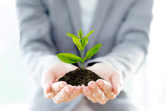 Businesswoman holding a plant  Stock Images