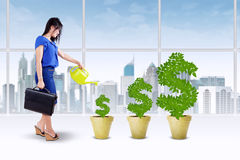Businesswoman keep the money tree Royalty Free Stock Photos