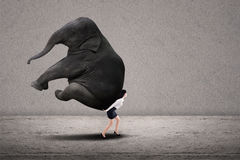 Businesswoman lifting heavy elephant stock images