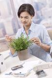 Businesswoman looking after potted plant Royalty Free Stock Image