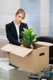Businesswoman packing belongings in box Royalty Free Stock Images