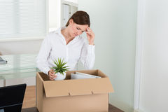 Businesswoman Packing Her Belongings In Box Stock Photo