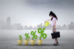 Businesswoman with percentage symbol. Image of successful young woman with plant on the pots shaped percentage symbol Royalty Free Stock Image
